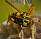Green web - Cover Design freelancer Bormujos