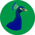 Young Peacock - eCommerce freelancer Gravina di catania
